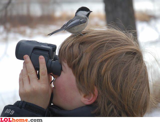 Bird watching FAIL