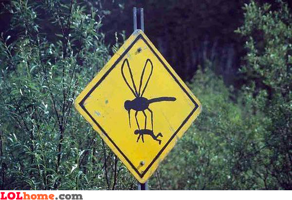 Giant mosquitoes