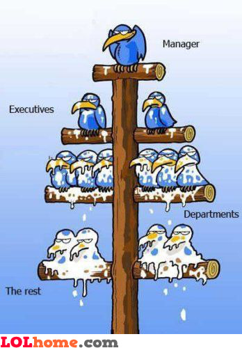 Hierarchy within the company