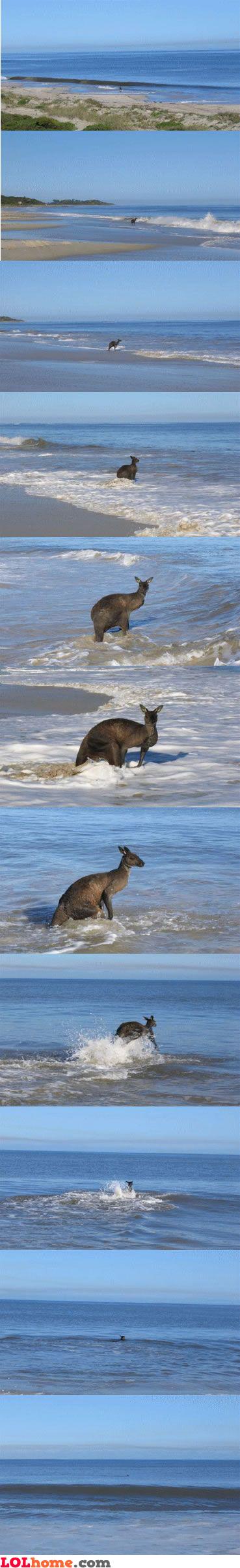 Suicidal kangaroo