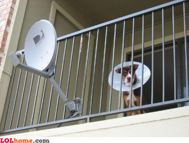 I feel like a satellite dish