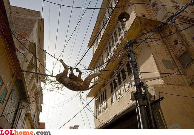 Electric wire jungle