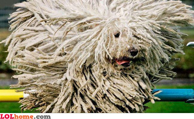 Doggy dreads