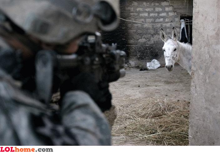 Donkey terrorist