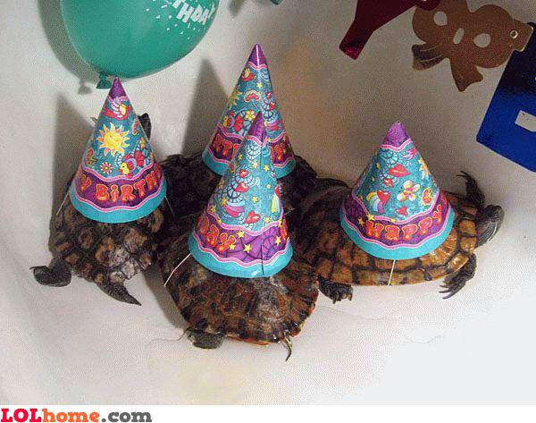 Birthday turtles