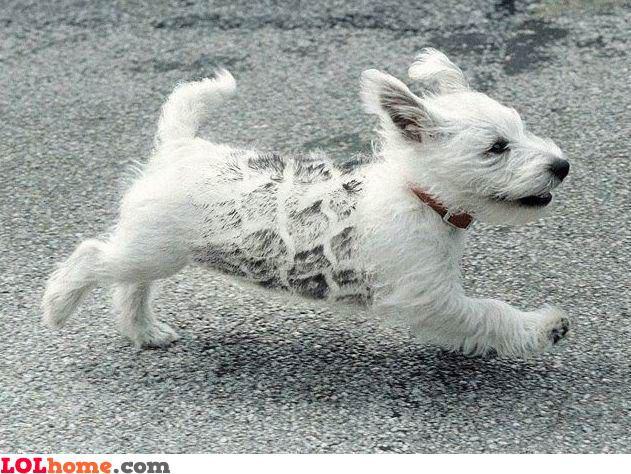 Dog ran over