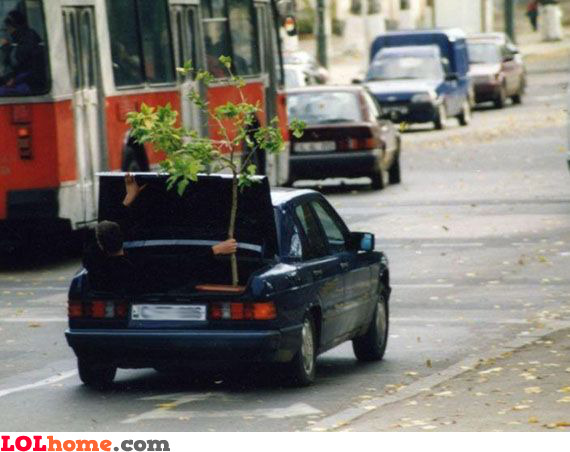 How to transport a tree