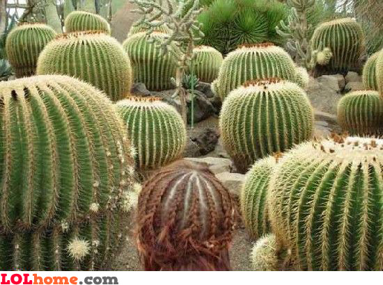 Cactus hairstyle