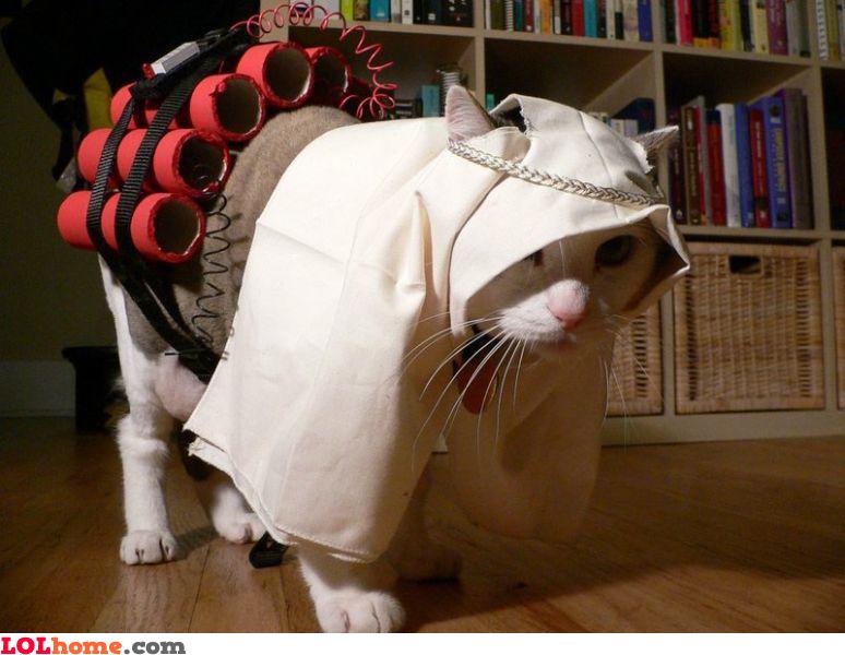 Suicide bomber cat
