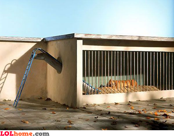 Zoo slide