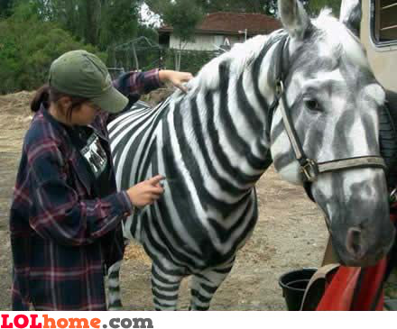 Since we cannot afford a zebra, we'll have to improvize