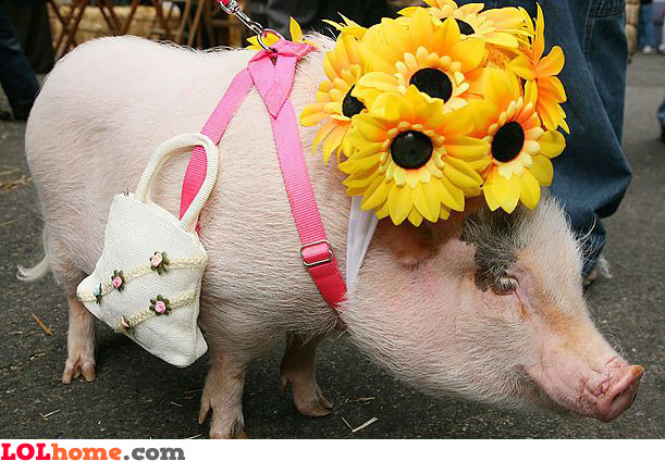 Spoiled pig