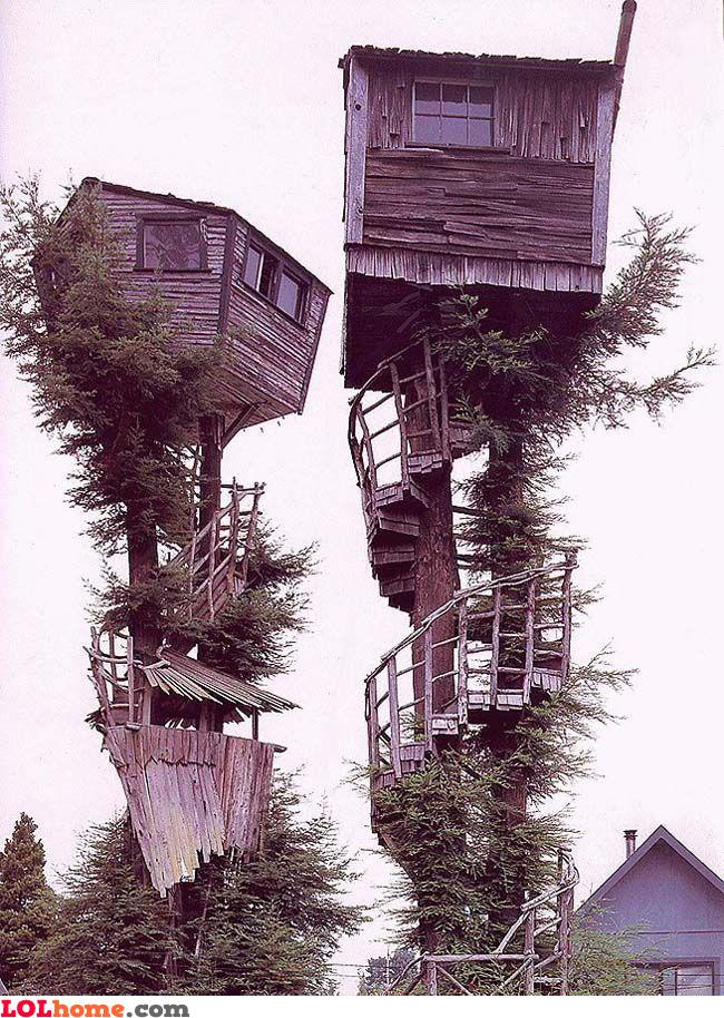 Extreme tree houses