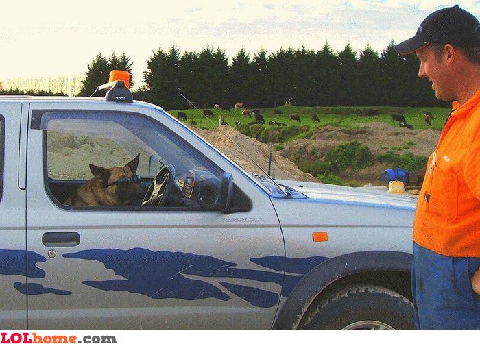 Need a ride, human?