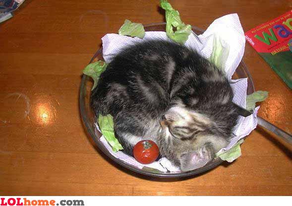 cat salad