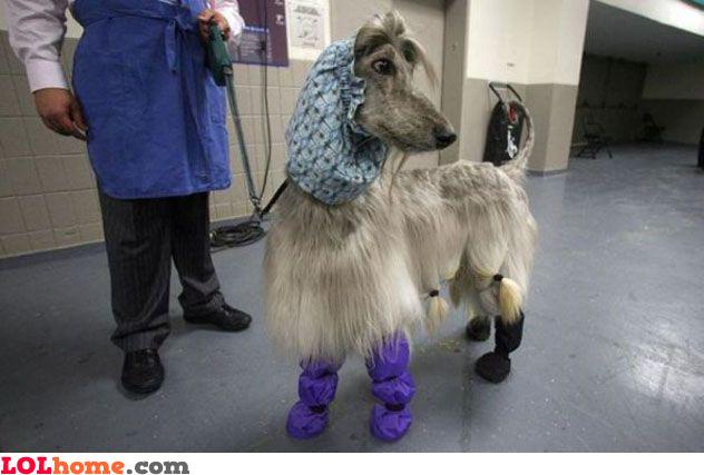 Crazy dog fashion