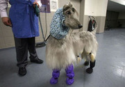 Crazy dog fashion