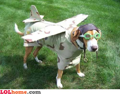 Doggy airlines