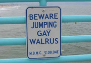 Jumping gay walrus