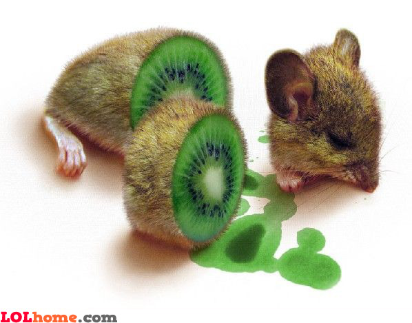 kiwi rat