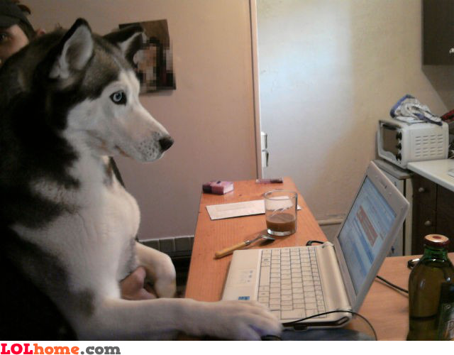 Web surfer dog