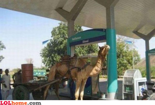 TDI Camel