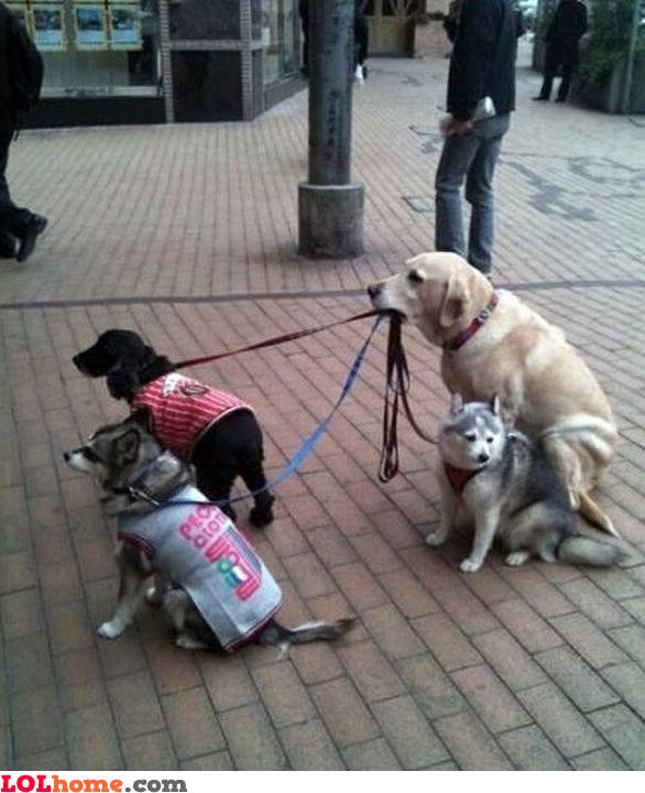 Dog nanny