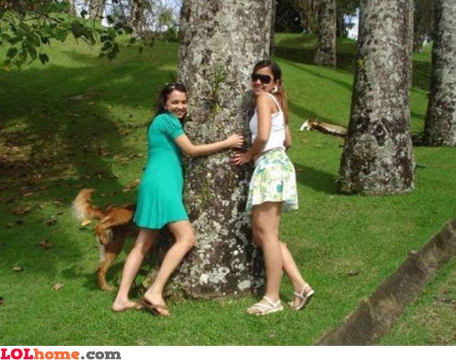 Svi vole drvo