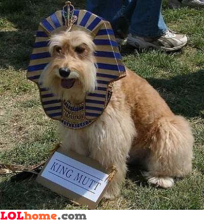 King Mutt