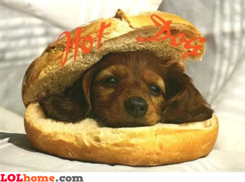 Pin Cute Dogs In Hot Dog Buns on Pinterest