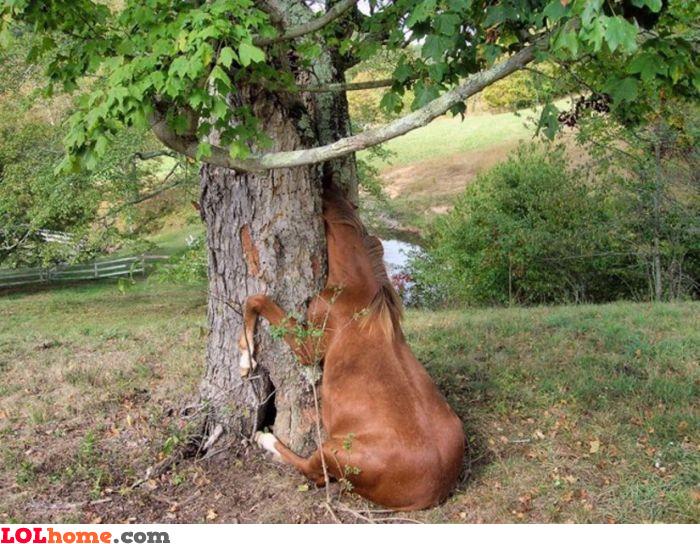 Stuck horse