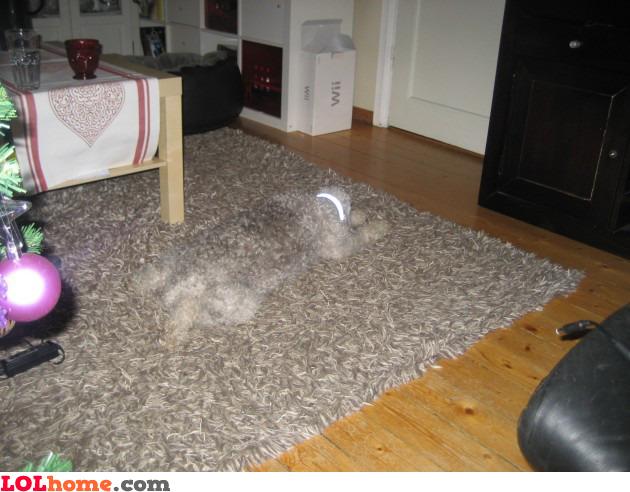 Camouflage dog