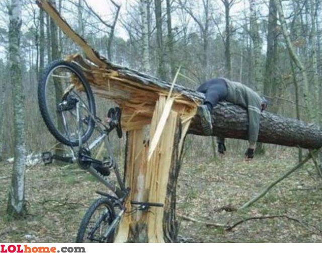 Speed kills trees