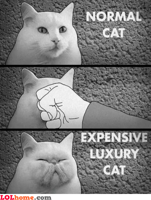 How to create an expensive cat