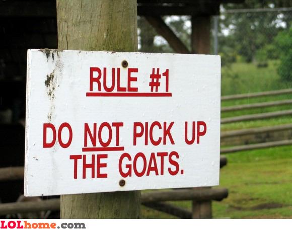 No goat picking