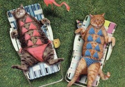 cat bathing suits