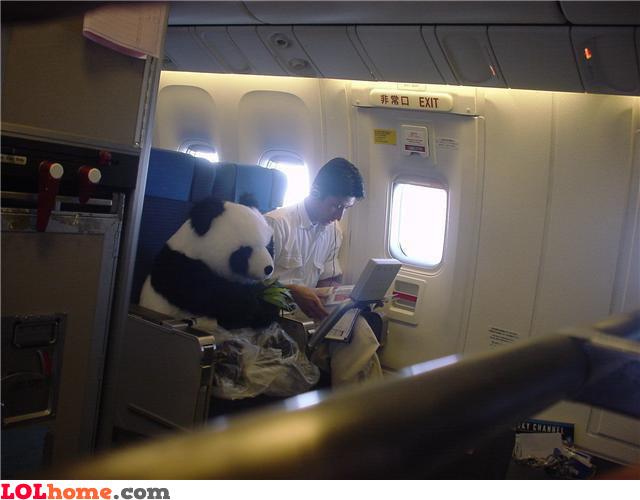 Panda on a plane