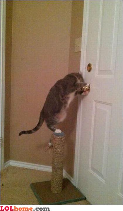 Must open the door