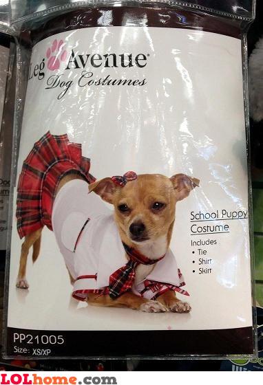School puppy costume