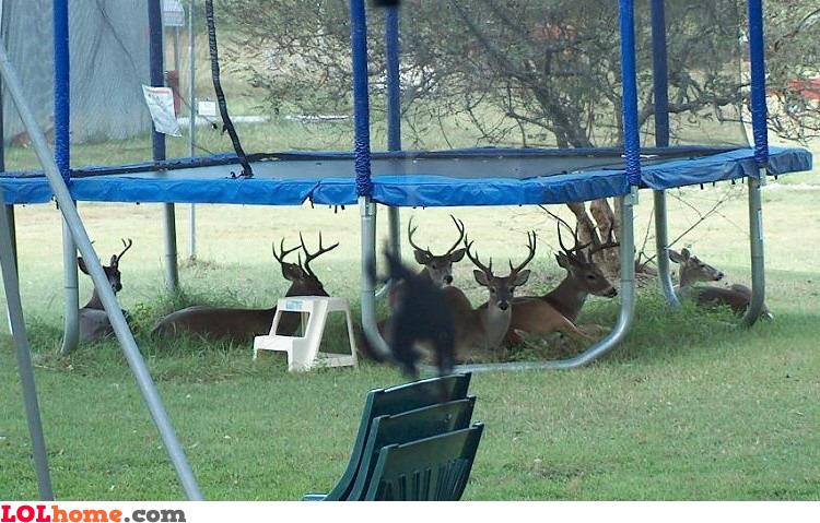 Under the trampoline