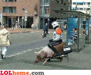 Moto PIGx2000