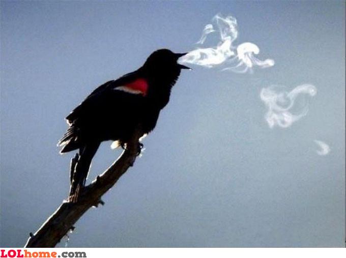 I heard you like smoking birdie
