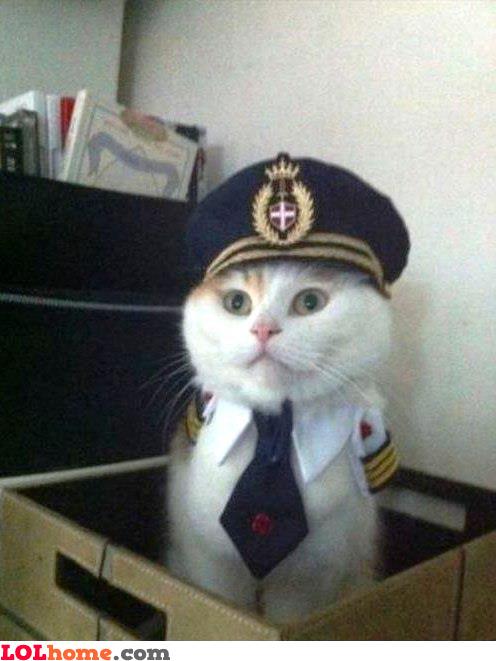 Discussion générale - Page 30 Captain-kitten