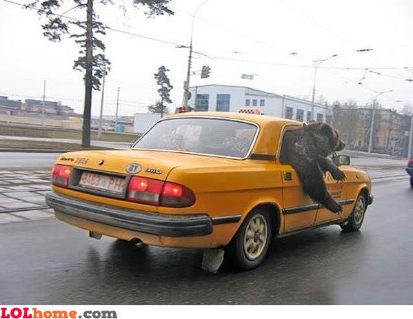 Bear's Car