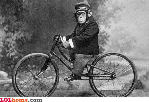 Chimp riding the bike