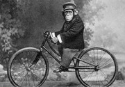 Chimp riding the bike
