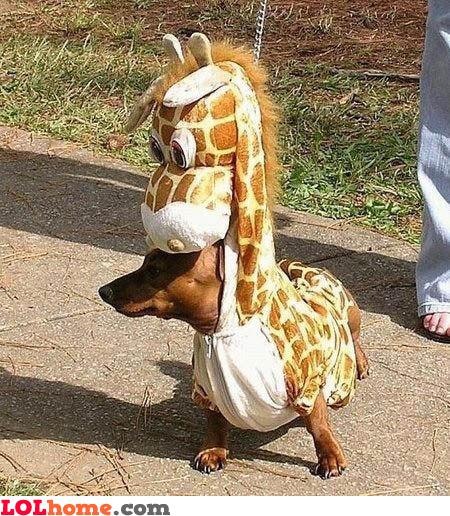 Nice costume