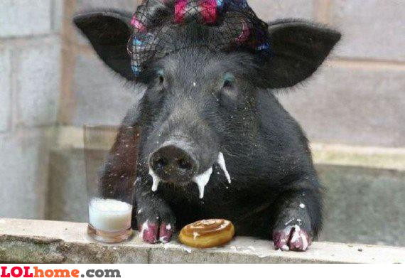 Pig Manners