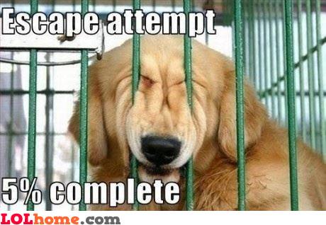 Escaping...