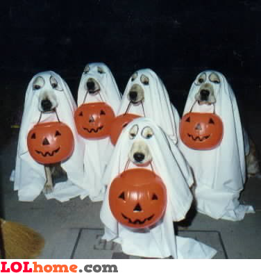 Trick or treat for dogs